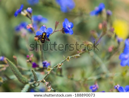 blue flowers in the wild, summer day