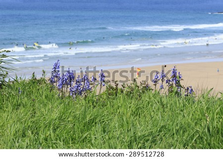 Blue flowers overlooking the ocean - stock photo