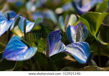 Blue flowers with green leafs - stock photo