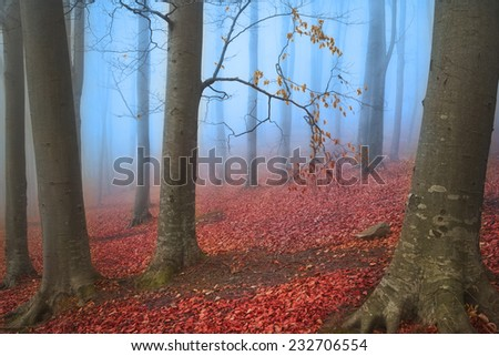 Blue fog in the forest during autumn  - stock photo