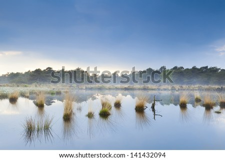 blue fog over swamp in Drenthe after rain - stock photo