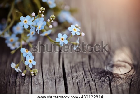 Blue forget-me-nots lie on a wooden table - stock photo