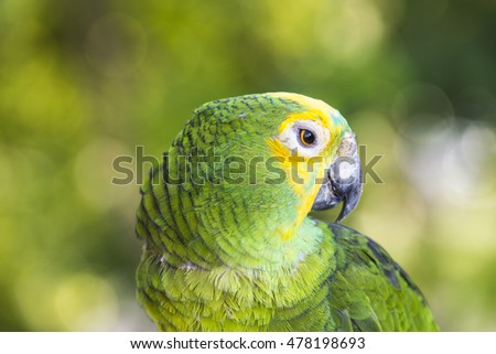 blue-fronted parrot, parrot resting on the branch of a tree
