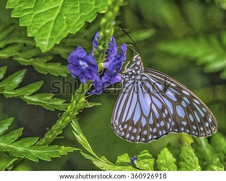 Blue glass butterfly feeding on nectar from purple flowers,photo art - stock photo