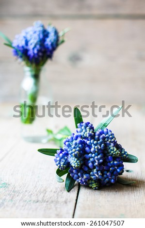 Blue grape hyacinth on a old wooden background