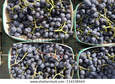 Blue grapes after the harvest in France - stock photo