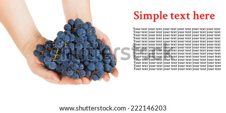 Blue grapes in female hands with space for text on white background