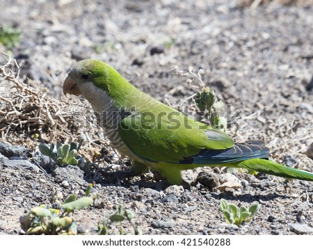Canary bird Stock Images Royalty Free Images amp Vectors Shutterstock