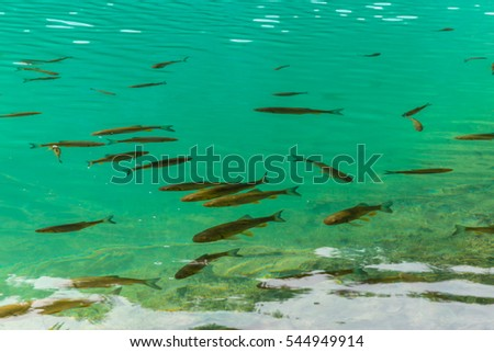 Blue-green crystal clear lakes in Plitvice, Croatia, on a bright sunny day in summer