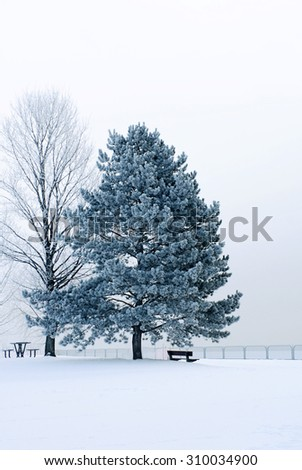 Blue hued icy winter scene - stock photo
