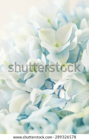 blue hydrangea flower with color effect - stock photo