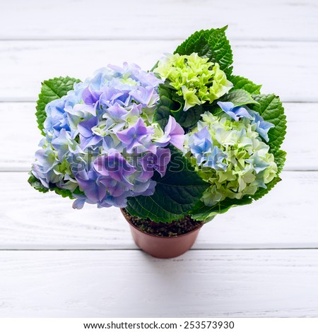 Blue hydrangea flowers on white wooden table, top view. - stock photo