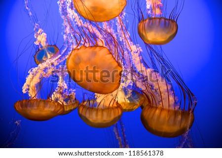Blue Jellies - stock photo