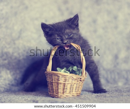 Blue Kitten sitting with a small wicked basket in her teeth. Close up of cute gray kitten - stock photo