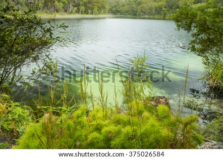 Blue Lake on North Stradbroke Island, Queensland, Australia is the perfect fresh water lake - stock photo