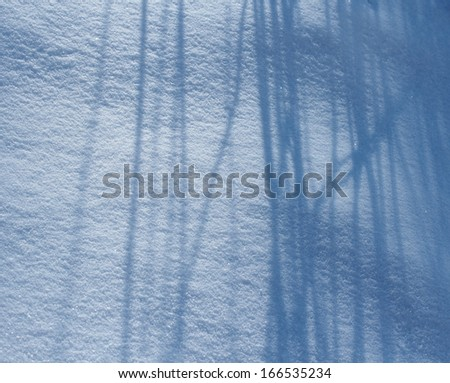 Blue long shadows of plants on the white fresh snow - stock photo