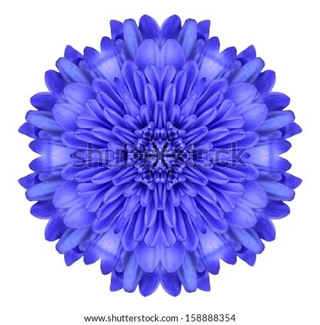 Blue Mandala Chrysanthemum Flower Kaleidoscope Isolated on White Background - stock photo