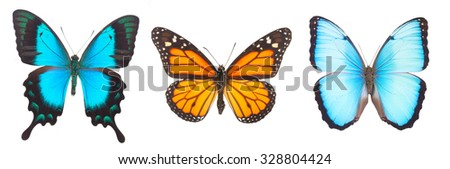 Blue morpho, monarch and Sea Green Swallowtail butterflies isolated on white background - stock photo