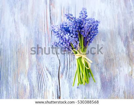 Blue muscari flowers (Grape hyacinth) on wooden background