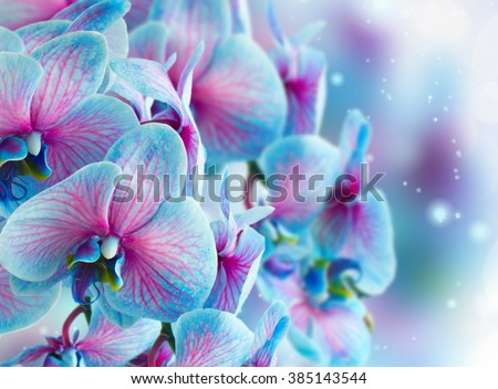 blue  orchid branch on gray bokeh background - stock photo