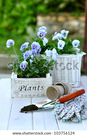 Blue pansies and gardening tools - stock photo