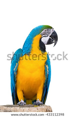 Blue parrot macaw isolated on white background. with Clipping Path