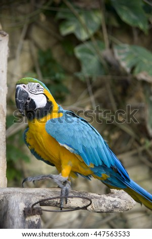 blue parrot on a tree