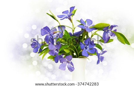 Blue Periwinkle flowers on a bokeh background