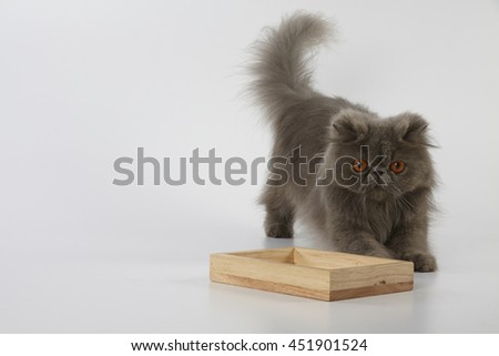 Blue persian cat crouching behind wooden tray on white background  - stock photo
