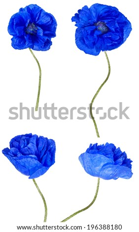 Blue poppy flowers collection isolated on stock photo safe to use blue poppy flowers collection isolated on white background mightylinksfo