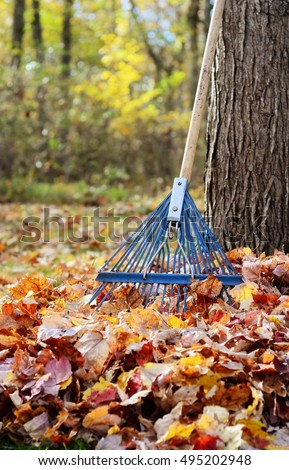 Blue rake in a pile of Autumn leaves