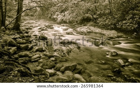 Blue Ridge Mountain Stream. Horizontal black and white Blue Ridge Mountain forest scene with a stream rushing by. North Carolina. - stock photo