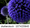 Blue round Flower - stock photo