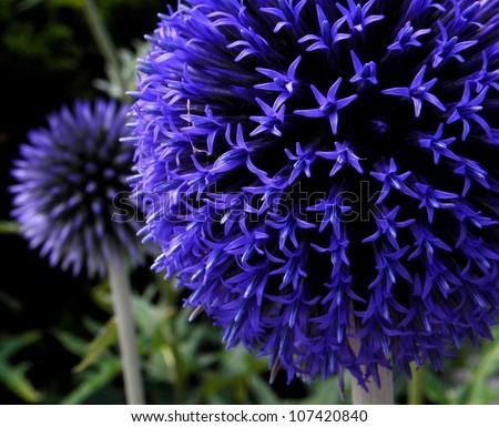 Blue round Flower - stock photo