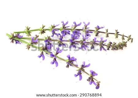 blue sage flowers on a bright background