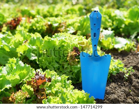 Blue scoop and green lettuce.