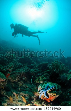 blue sea star with diver underwater in Sipadan, Malaysia - stock photo