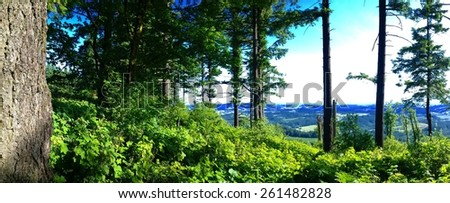 Blue Skies, Sunshine, and Valley Views from the Forest.  Lookout Point from Bald Peak State Park - Summer Weather in Oregon. - stock photo