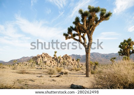 Blue sky above arid landscape with Joshua Tree and rock formations. - stock photo