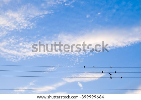 Blue sky and birds on cable lines - stock photo