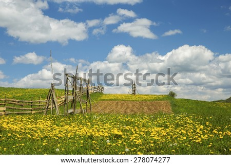 Blue sky and dandelion field in a sunny day