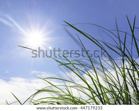 blue sky and green blade of grass