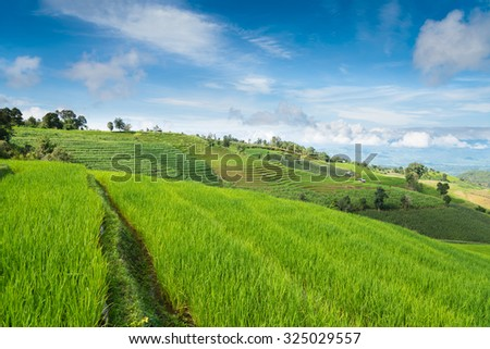 Blue sky and green Terraced Rice Field in PA bong piang Chiangmai, Thailand