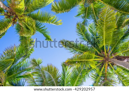 Blue sky and palm trees view from below
