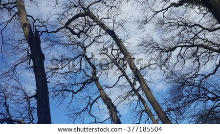 blue sky and the bare branches of a tree
