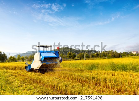 Blue sky and white clouds tracts of mature rice harvester working in blue. - stock photo