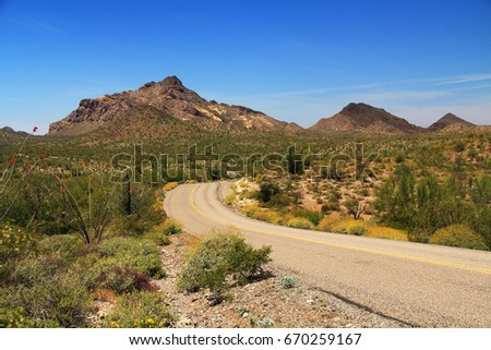 Blue sky copy space and winding road near Pinkley Peak in Organ Pipe Cactus National Monument in Ajo, Arizona, USA including a large assortment of desert plants, which is a short drive west of Tucson