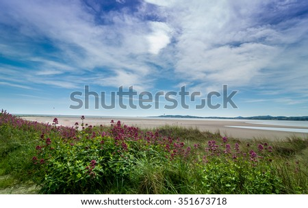 Blue sky green plant flora red flowers northern landscape Ireland  - stock photo