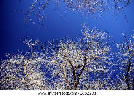 blue sky in winter day