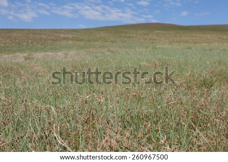 Blue sky over the steppes of Mongolia - stock photo